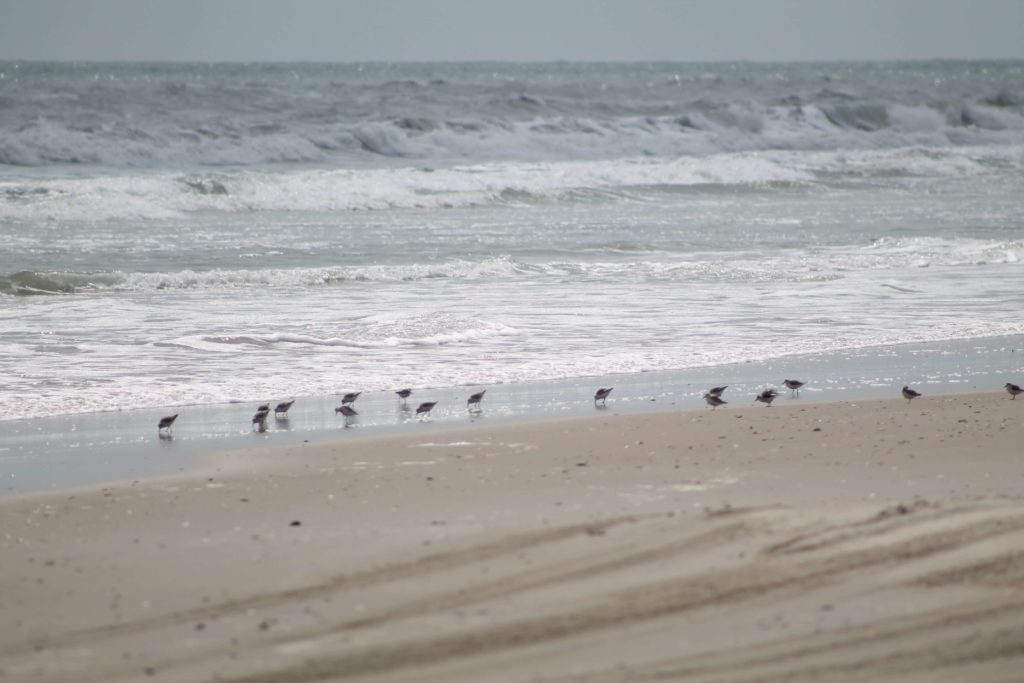 Things to do in Outer Banks NC Outer Banks Beach