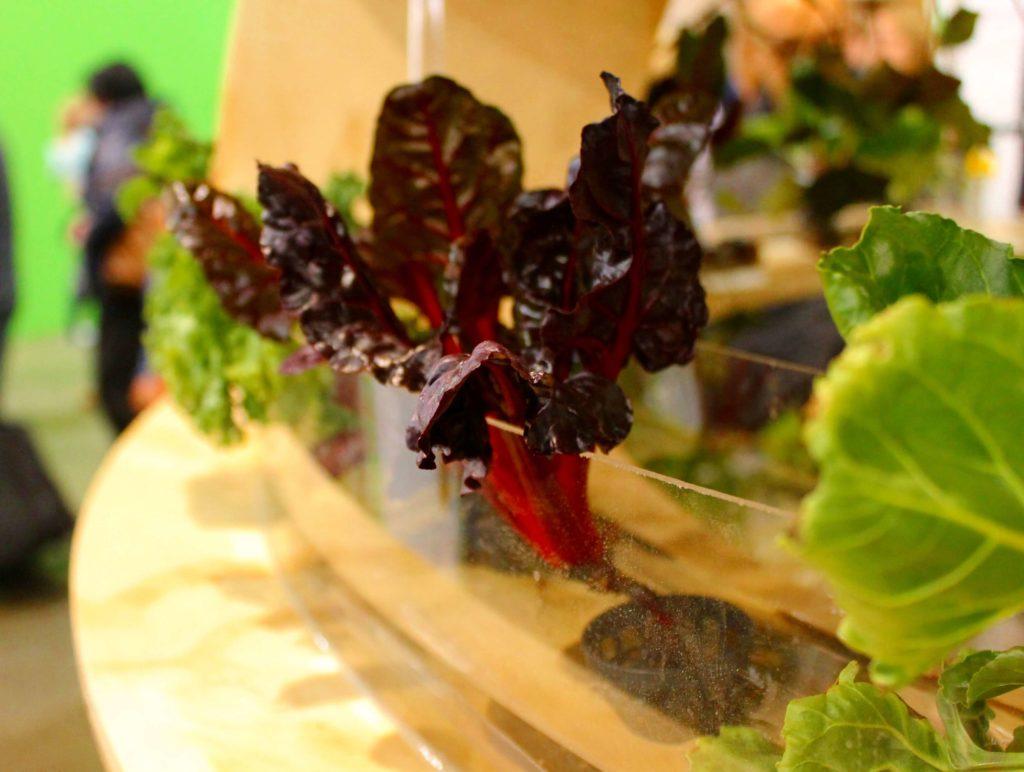 a detailed family guide to the Philadelphia flower show aquaponics