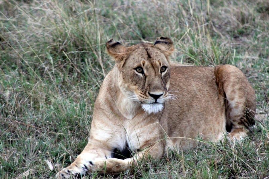masai mara kenya africa best national parks in the world