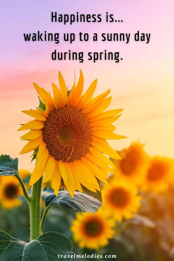 Beautiful Flower And Spring Quotes To Celebrate The Soulful Season